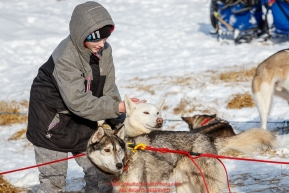 Ten-year old Bella Meglitch pets a Rob Cooke dog at Takotna on Thursday, March 8th during the 2018 Iditarod Sled Dog Race -- AlaskaPhoto by Jeff Schultz/SchultzPhoto.com  (C) 2018  ALL RIGHTS RESERVED