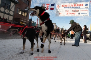A Jesse Holmes dog jumps to go at the start line on 4th avenue during the ceremonial start of the 2019 Iditarod in downtown Anchorage, Alaska on Saturday March 2.Photo by Jeff Schultz/  (C) 2019  ALL RIGHTS RESERVED