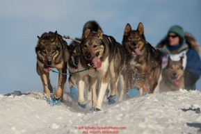 Paige Drobney team runs down the Cordova Street Hill during the ceremonial start of the 2019 Iditarod in downtown Anchorage, Alaska on Saturday March 2.Photo by Jeff Schultz/  (C) 2019  ALL RIGHTS RESERVEDleader dogs running at camera