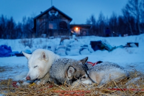 Rob Cooke's dogs Hitch and Redgrave sleep in the early morning hours at the ghost-town checkpoint of Iditarod on Saturday, March 10th during the 2018 Iditarod Sled Dog Race -- AlaskaPhoto by Jeff Schultz/SchultzPhoto.com  (C) 2018  ALL RIGHTS RESERVED