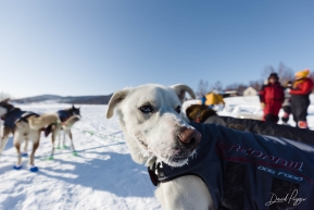 Ryan Redington's Dog Team