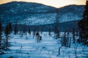 Aaron Burmeister Out of Iditarod