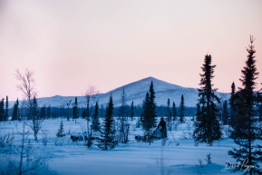 Travis Beals Leaving Iditarod