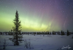 Northern Lights at Iditarod