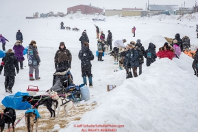Dogs rest and spectators watch as a teams arrives on the at the Unalakleet checkpoint on Monday  afternoon March 12th during the 2018 Iditarod Sled Dog Race -- AlaskaPhoto by Jeff Schultz/SchultzPhoto.com  (C) 2018  ALL RIGHTS RESERVED