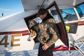 The Iditarod Air Force, flying all the dropped dogs in Cripple safely back to Anchorage, March 13, 2020.