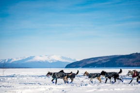 Jessie Royer's team is the first onto the Yukon River for the 2020 Iditarod on March 13th in Ruby, AK.