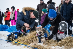 Volunteer veteranians tending to each team in Unalakleet, March 15th, 2020.