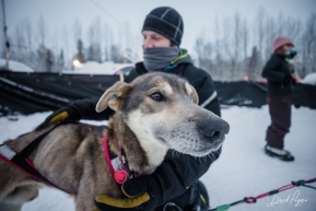 Aaron Burmeister's Dog at the Finish