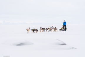 Joar Leifseth Ulsom and his team travel across the frozen ice on their way into the Koyuk checkpoing on March 16, 2020