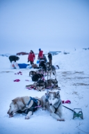 Tom Frode Johansen and his team, checking into the Unalakleet checkpoint, March 16th. 2020.
