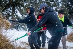 Lead checker, Jonathan Douglas, of Koyuk (in foreground)  recruits a few local boys to help move straw.