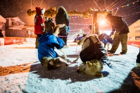 The lead dogs of Tom Frode Johansen dive into the snow face first for a dual post-race snow bath and face scrub after finishing the Iditarod in the early hours of March 19, 2020 (Nome, AK).