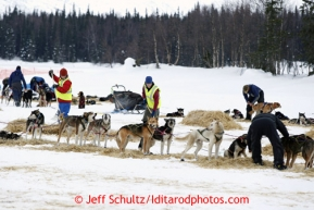 Volunteers look after dogs at Finger Lake checkpoint March 4, 2013.