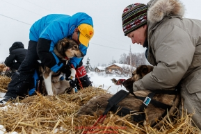 Volunteer veterinarians Lynel Tocci and Jennifer Pearson examine Pete Kaiser's team shorlty after his arrival at the Kaltag checkpoint on Saturday March 9th during the 2019 Iditarod Trail Sled Dog Race.Photo by Jeff Schultz/  (C) 2019  ALL RIGHTS RESERVED