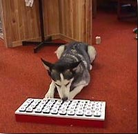 zuma-keyboard