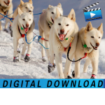 Digital Downloads