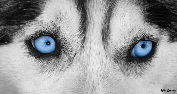 Blue eyes[2]