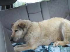 Otto Riding in the Car
